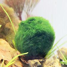 New 3-4cm Marimo Moss Balls Cladophora live aquarium plant fish tank shrimp nano