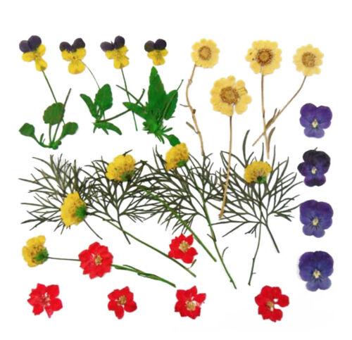Pressed flowers marguerites pansy larkspur foliage craft floral art