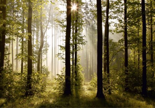 SUNNY MORNING FOREST TREES Photo Wallpaper Wall Mural GREEN 360x254cm HUGE!