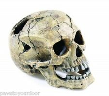 Aquarium Fish Tank Human Skull Ornament Large 20cm Cave Decoration Classic 2966