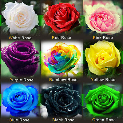 1080 Rose Seeds120/Color  Pretty DIY Garden Gift  Easy to grow  Free Shipping