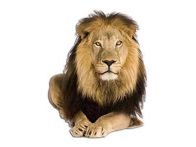 Wandsticker Sticker Wandaufkleber für Wohnzimmer Löwe Raubkatze Tier liegt
