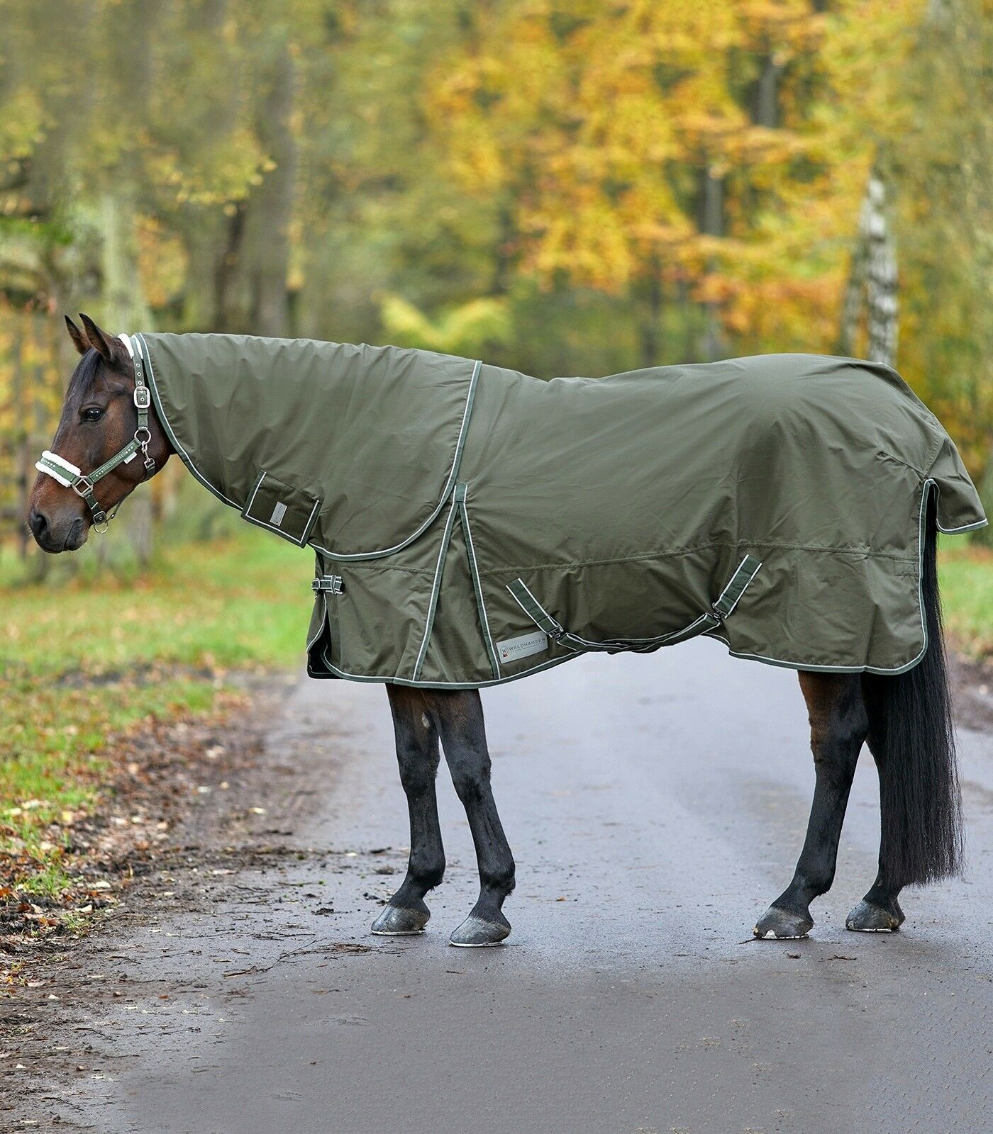 Coperta outdoor cavallo antipioggia impermeabile da paddock imbottitura 200 gr.