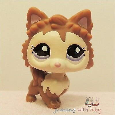 Littlest Pet Shop #2280 - Brown & Cream Pomeranian Puppy Dog w/ Purple Blue Eyes