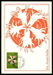 Enthousiaste Liechtenstein Mk 1971 Flore Splendeur-Œillet Maximum Carte Maximum Card Mc Cm Ck31-afficher Le Titre D'origine Pure Blancheur