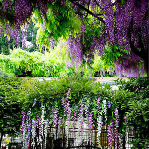 Image Is Loading 24x Artificial Silk Wisteria Leaf Hanging Flower Garland