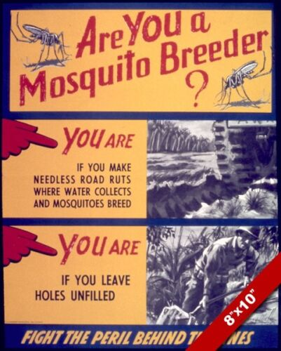 UNITED STATES WWII ANTI MOSQUITO DISEASE PROPAGANDA POSTER REAL CANVASART PRINT