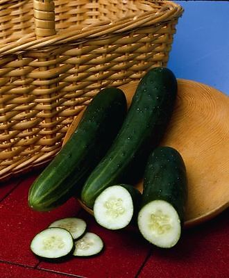 Vegetable - Cucumber - Perfection - 25 Seeds - Economy Meer Kortingen Verrassingen