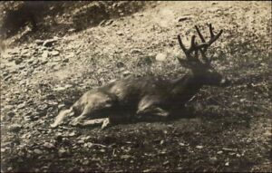 Spokane-WA-Deer-at-Park-Hotel-c1910-Real-Photo-Postcard