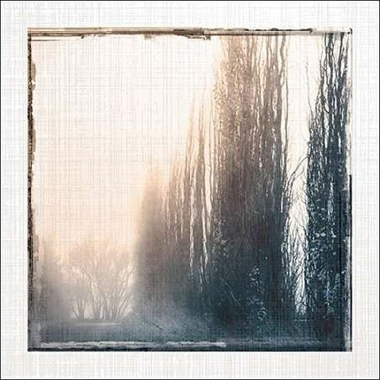Carol Robinson  Foggy Light IV Keilrahmen-Bild Leinwand Nebel Bäume Wiese