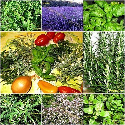 Kräuter der Provence Lavendel Thymian Oregano Rosmarin Majoran ... Mix 200 Samen