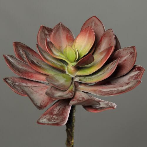 Sukkulente 25cm rot DP Kunstpflanzen künstliche Sukkulenten Pflanzen