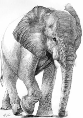 Black /& White Elephant Painting Quality 100/% cotton Canvas wall home decor
