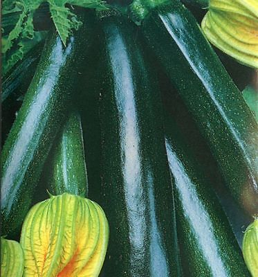 VEGETABLE  COURGETTE BLACK BEAUTY  75 SEEDS
