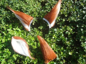 Anime Spice and Wolf Holo Fox Tail Ear Any Size Halloween Cosplay Prop