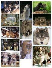 WOLF PHOTO-FRIDGE MAGNETS (12 IMAGES)