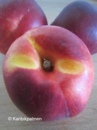 Nektarine /'Rhônegold/' winterharte Pflanze 140-170cm im Topf saftig Prunus