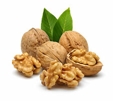 Walnut  10 Kg Direct with shell From Kashmir