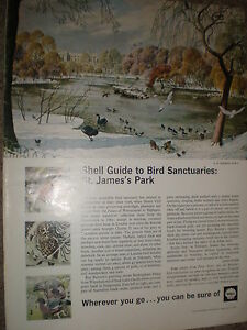 Old-art-advert-Shell-guide-St-james-039-s-park-S-R-Badmin-print-1965-ref-BW