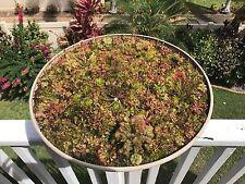 04/2017 FRESH EASY TO GROW Drosera Sundew Seed Mix 75+ Carnivorous US Seller