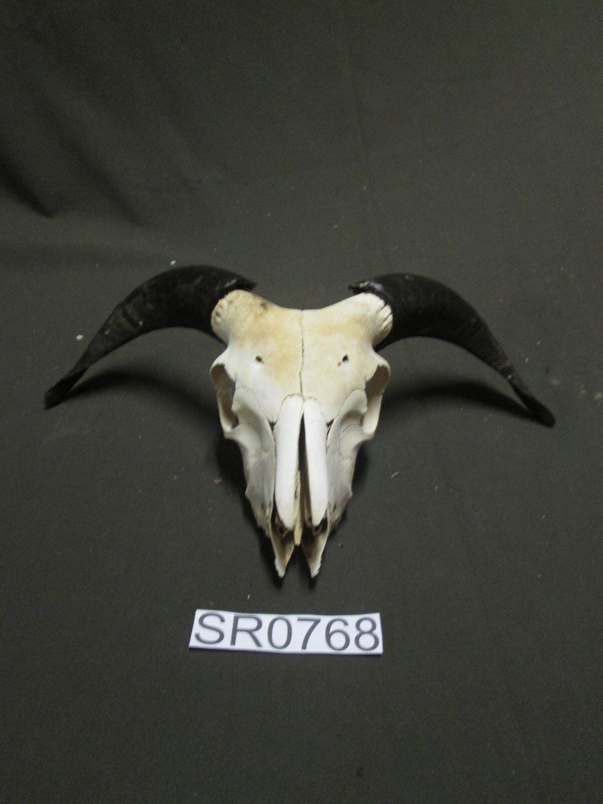 Decoración Rústica Ram cráneo Hill Country al aire libre SR0768