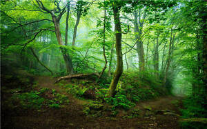 Spring Woodland Magic Forest Full Wall Mural Photo