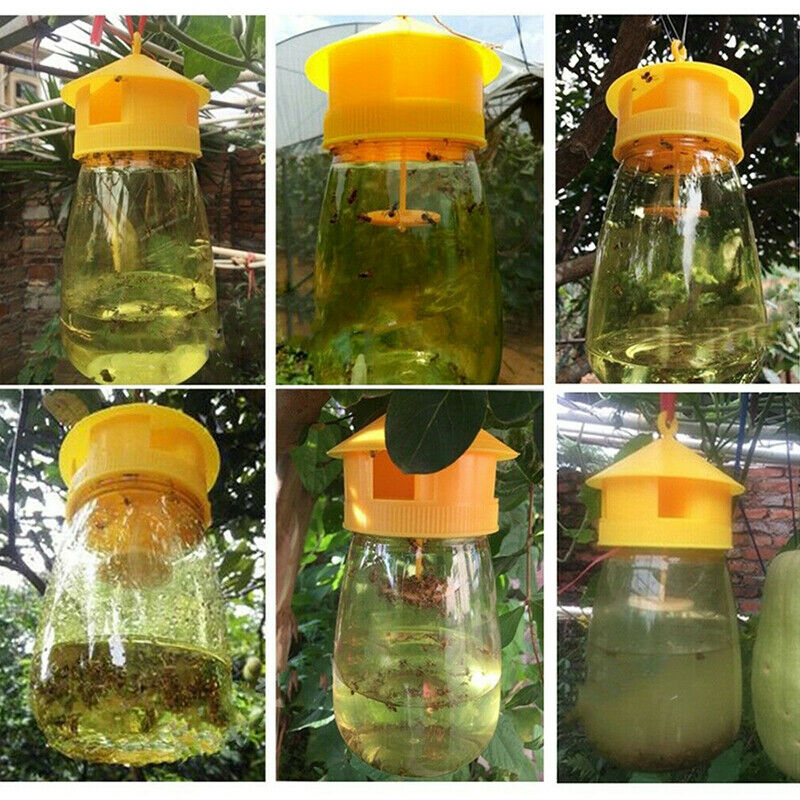 trap fruit stalls melon fruit insects fruit fly bee armyworm attract trap ag&qi