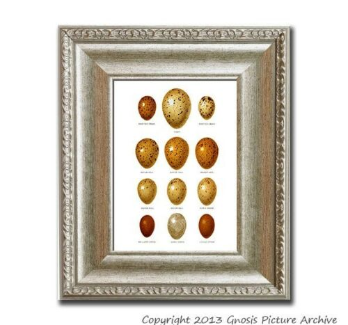 Bird Egg Prints SET OF 9 Unframed Bird Egg Print Antique bird egg wall art
