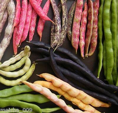 BUSH BEAN 'Heirloom Mix' 25 seeds mixed varieties GM FREE dwarf vegetable garden