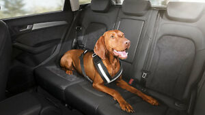 Harnais de protection pour chien Audi d'origine Harnais pour chien Sangle de ceinture de sécurité Gr.   S M L Xl