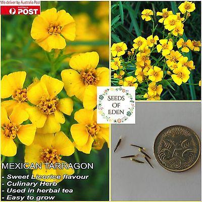 Tagetes Erecta Seeds  F121 50 Yellow African Mari gold