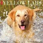 Just Yellow Labs by Willow Creek Press 9781682342428 Calendar 2016