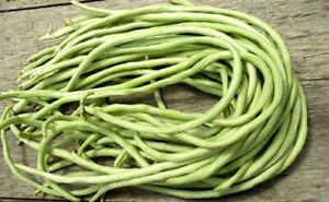 15+Yard Long Bean seeds Asian Chinese Long Bean String beans Productive USA