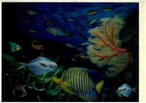 marine-life-fish-3D-Lenticular-Holographic-Stereoscopic-Picture-Wall-Art