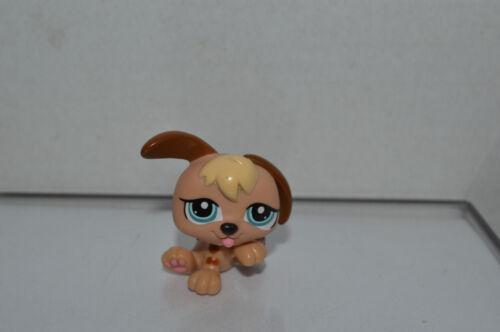 Littlest Pet Shop~#1340~1 Petriplets Puppy Dog~Beige Yellow Chocolate~Blue Eyes
