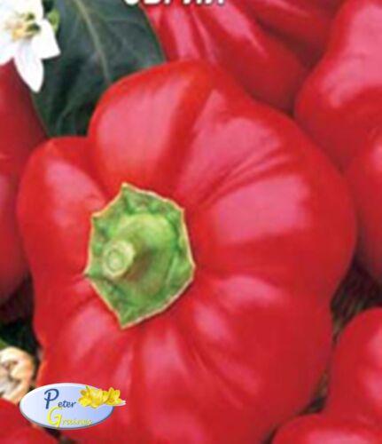45 Samen Gemüsegarten Gemüse Pflanzen Samen Paprika OBRIY