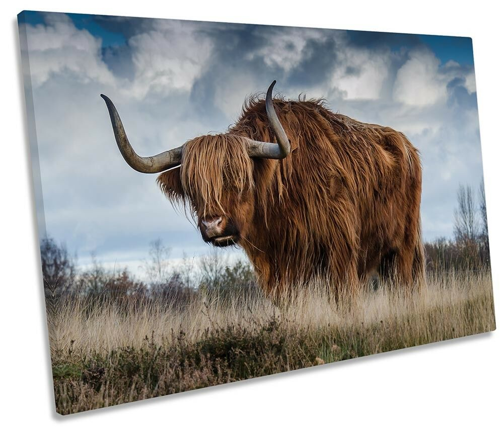 Highland Cow Bull Framed SINGLE CANVAS PRINT Wall Art