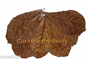 """8 Pcs Medicine For Fish Curable To Produce An Effect Toward Clear Vision Lovely Almond Leaves Catappa Ketapang 6-7"""" 30 Gal."""