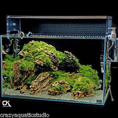 Random pick ADA Dragon stone rock aquarium Moss plant ...