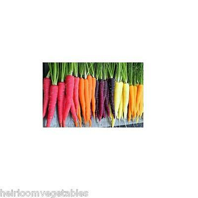 Rainbow Blend Carrots Kaleidoscope Seed Mix 1,500 seeds ***SAME DAY SHIPPING***