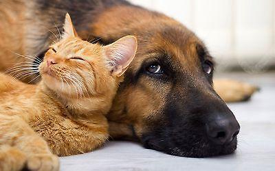 2 X 10 G Amazon Pro Wurmkur / Entwurmung Ohne Chemie!*1 X Hund Und 1 X Katze*