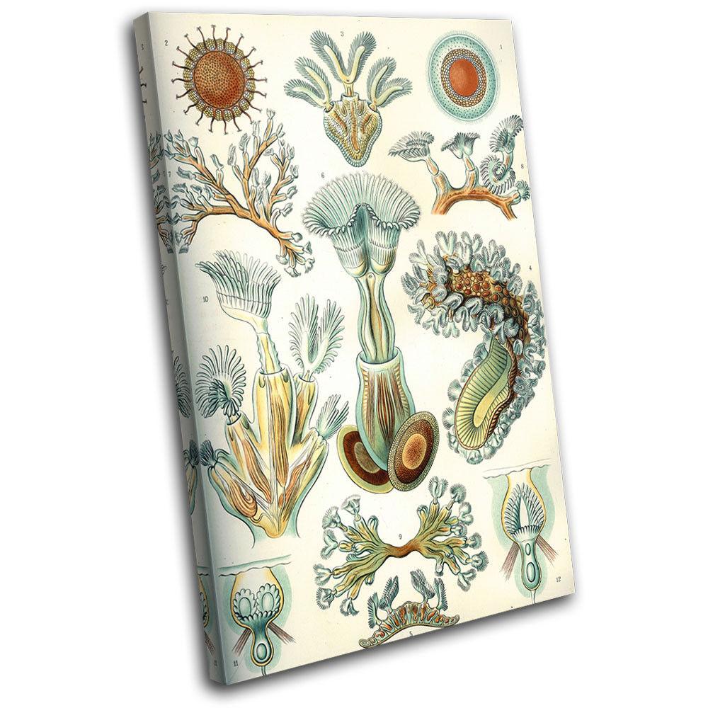 Botanical Coral Vintage Retro Floral SINGLE Leinwand Wand Kunst Bild drucken