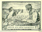 Field Champs Récolte Macedonia Bulgaria TOBACCO HISTORY HISTOIRE TABAC CARD 30s