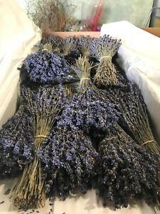 Fragrant Dried Lavender Bunch |250-300 stems | Home Decor | Wedding Floral