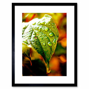 Photo-Leaf-Water-Drop-Green-Nature-Framed-Print-12x16-Inch