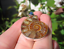 925-Plata-Africano-Madagascar-Amonita-Fossil-Colgante-Collar-Borgona-Color miniatura 2