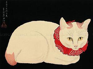 JAPAN-NATURE-CAT-WHITE-SHOTEI-TAKAHASHI-TAMA-POSTER-ART-PRINT-BB48A