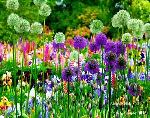 "FrameReady LtEd Print /""Altos de Flor/"" Flower Garden C-B/&W ArtPhoto Dig-FILES"