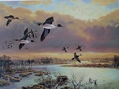 Futures In Greenwings Herb Booth Watery Blind Lab Anxious Water  Decoys GW Teal
