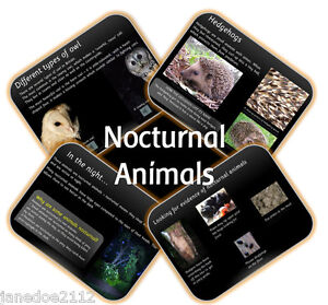 KS1-Year-2-topic-NOCTURNAL-ANIMALS-Primary-IWB-Teaching-Resources